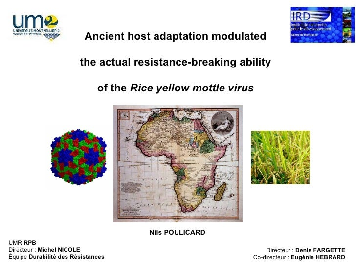 Ancient host adaptation modulated the actual resistance-breaking ability of the  Rice yellow mottle virus Directeur :  Den...