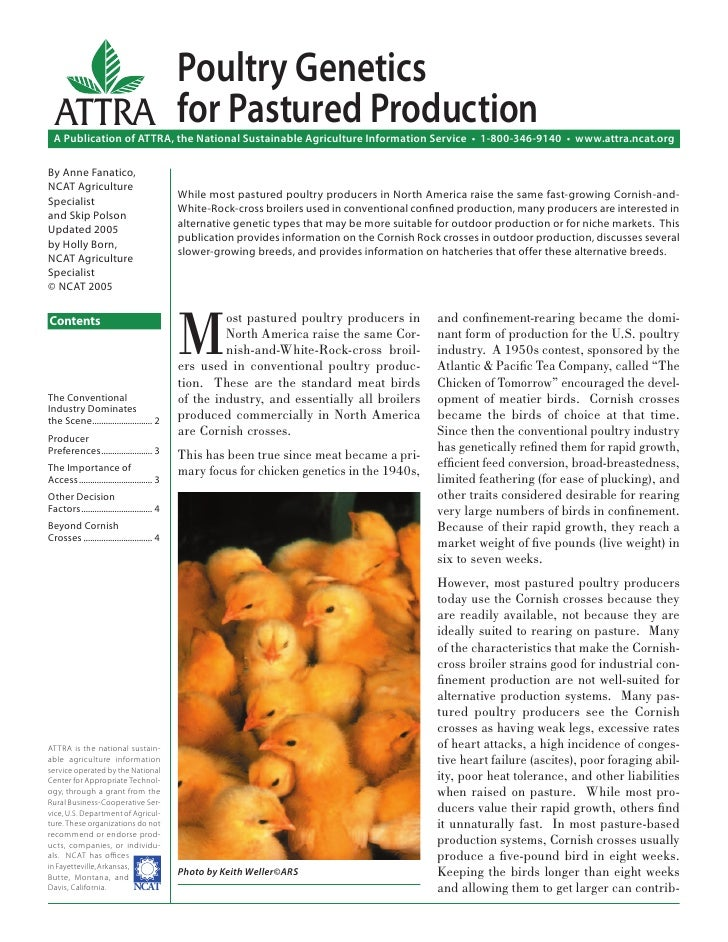 Poultry Genetics  ATTRA for Pastured Production  A Publication of ATTRA, the National Sustainable Agriculture Information ...