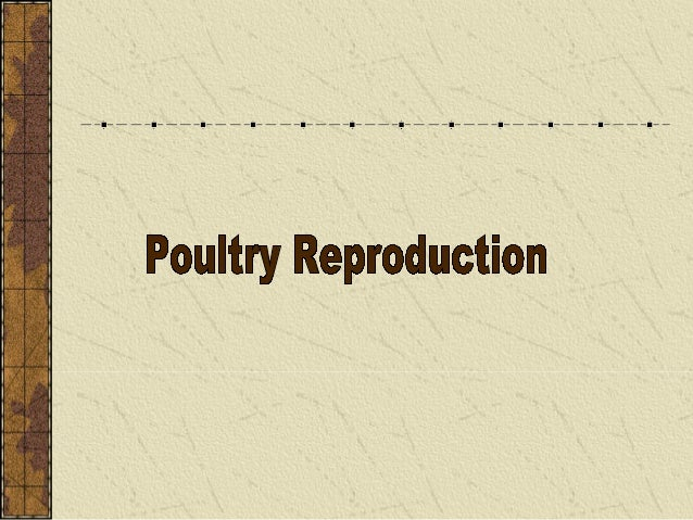 What the major male and female reproductive organs in poultry and their functions? III. The reproductive systems of poultr...