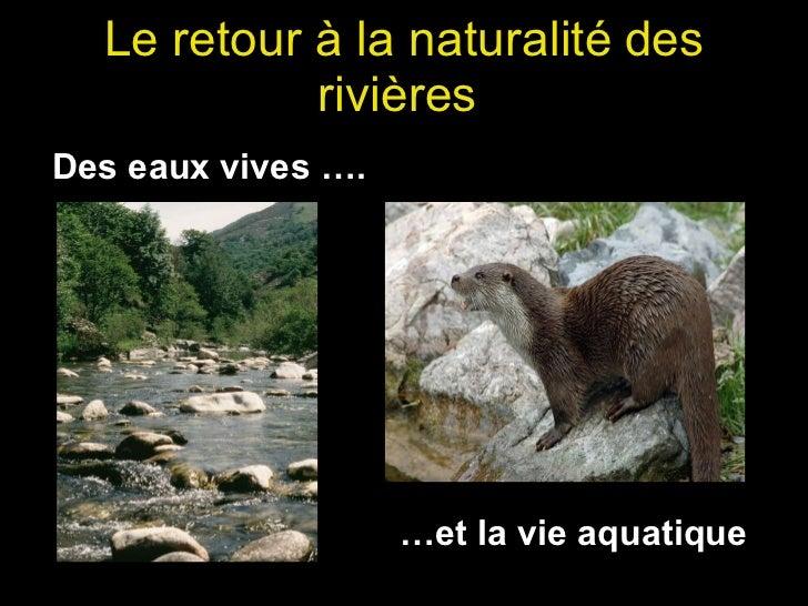 Le retour à la naturalité   des rivières  Des eaux vives …. … et la vie aquatique