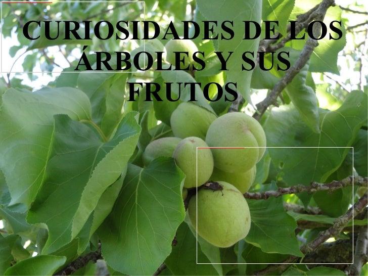 CURIOSIDADES DE LOS ÁRBOLES Y SUS FRUTOS