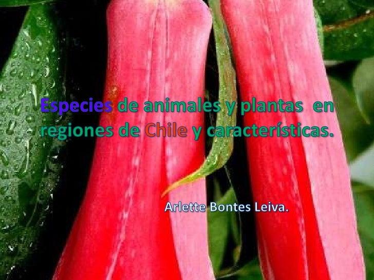 Especies de animales y plantas  en regiones de Chile y características.<br />Arlette Bontes Leiva.<br />