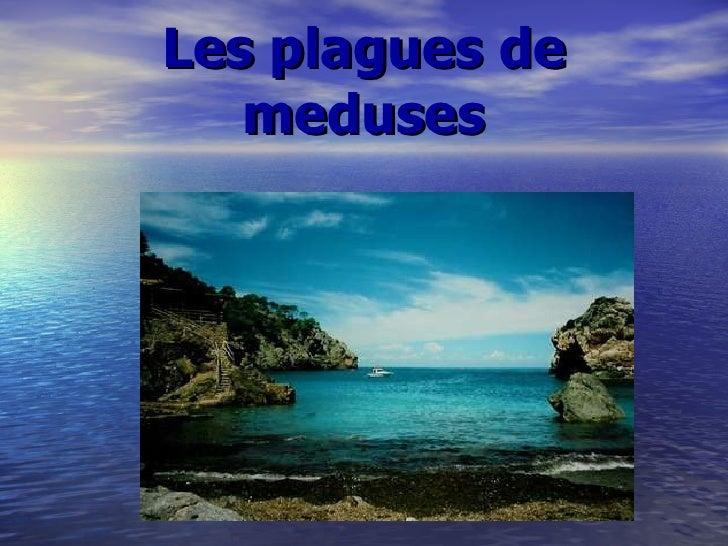 Les plagues de meduses