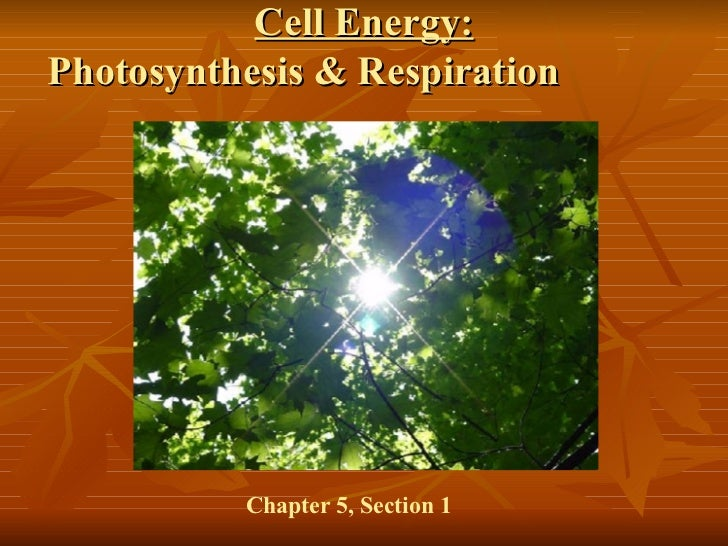 Cell Energy: Photosynthesis & Respiration  Chapter 5, Section 1