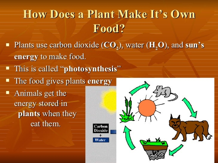 How Does Animal Cells Make Their Food