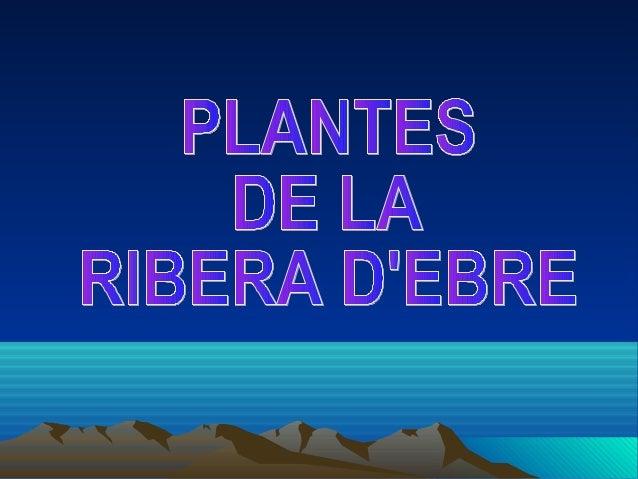 PLANTES DE LA RIBERA D'EBRE