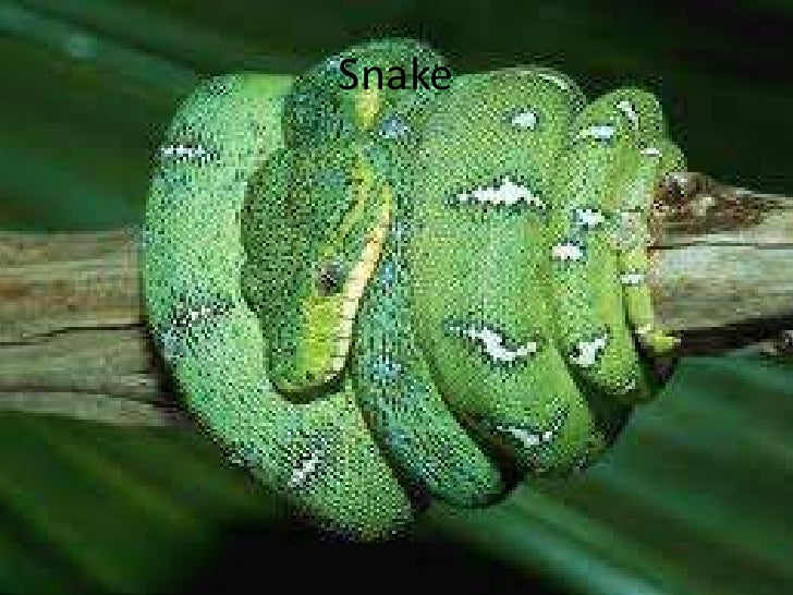 first conditional snake game