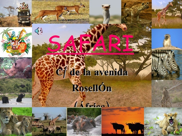 SAFARI   C/ de la avenida RosellÓn (África) Numero de información:933478569