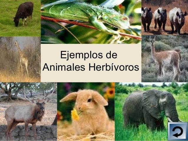 Los Animales: herbivoros y carnivoros