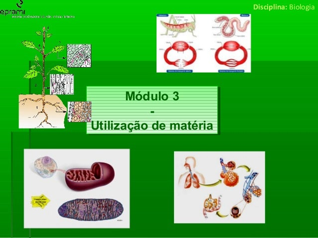 Disciplina: Biologia  Módulo 3 Módulo 3 -Utilização de matéria Utilização de matéria