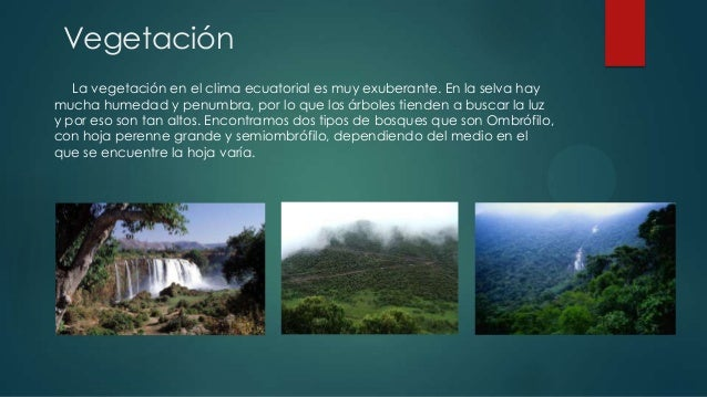 Clima ecuatorial y tropical lluvioso for Arboles de hoja perenne para clima continental