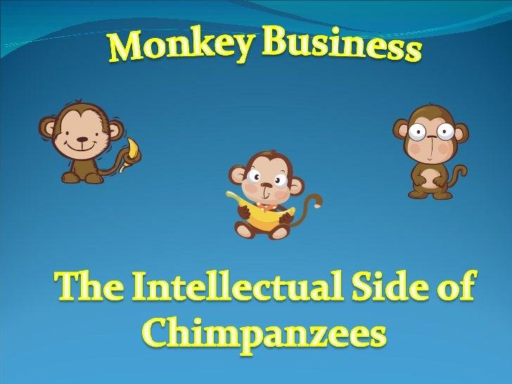0847520 Chimpanzees