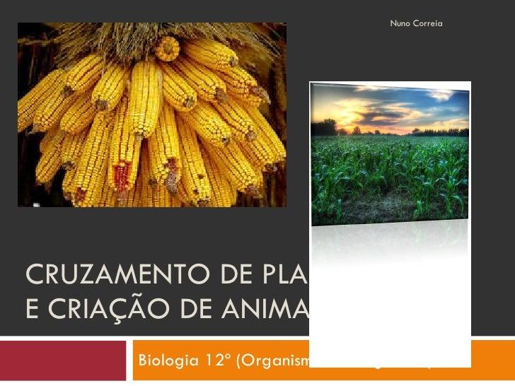 CRUZAMENTO DE PLANTAS E CRIAÇÃO DE ANIMAIS Biologia 12º (Organismos Transgénicos) Nuno Correia