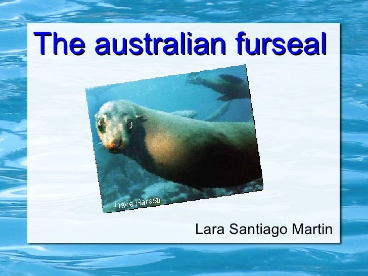 The australian furseal            Lara Santiago Martin