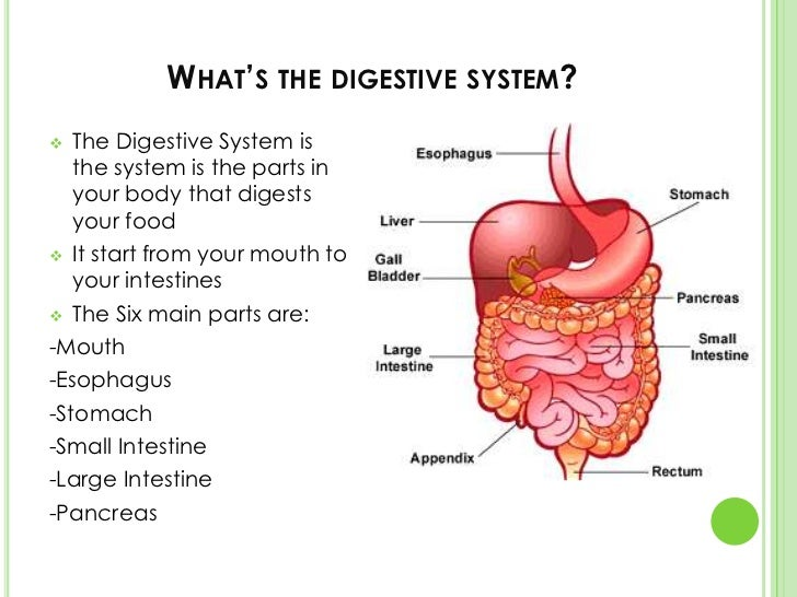 the process of digestion The small intestine continues the process of breaking down food by using enzymes released by the pancreas and bile from the liver bile is a compound that aids in the digestion of fat and.