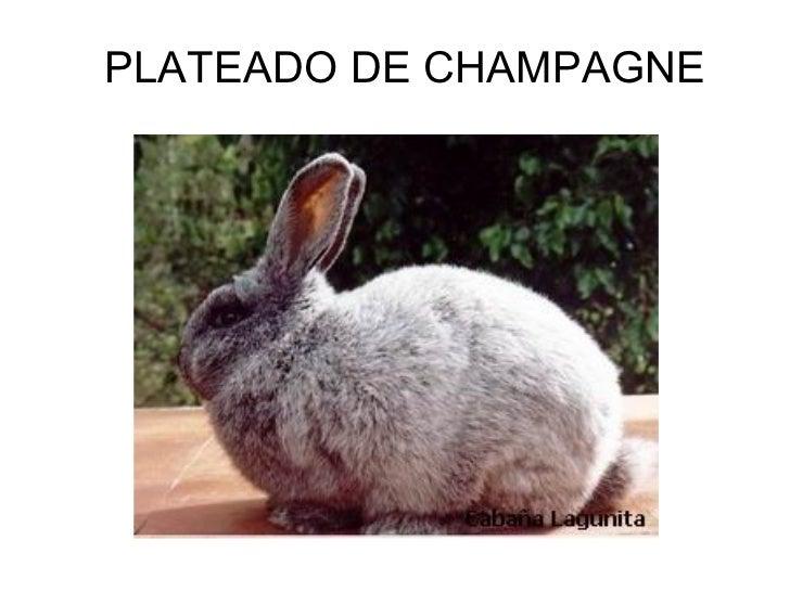 Proyecto crianza de conejos - Perú - Monografias.com