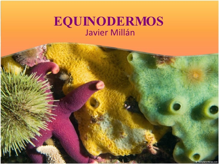 EQUINODERMOS Javier Millán