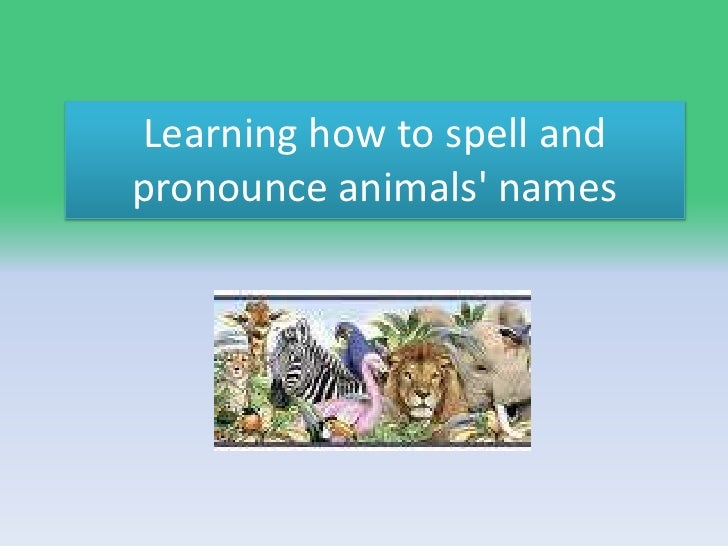 Learning how to spell and pronounce animals' names<br />