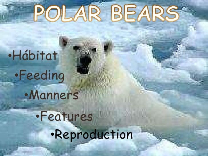 POLAR BEARS<br /><ul><li>Hábitat
