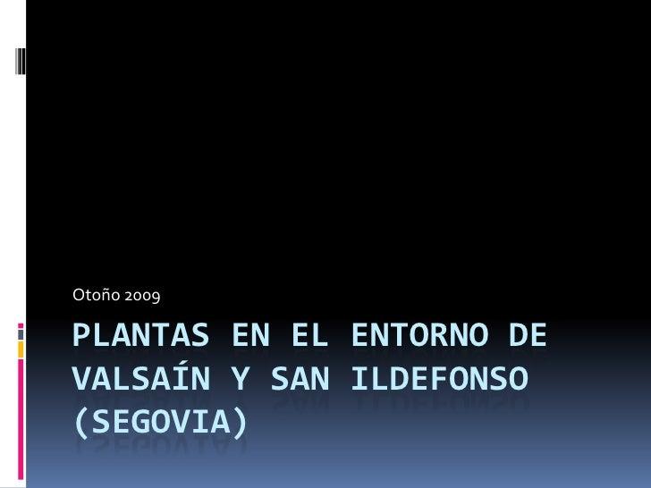 Plantas en el entorno de Valsaín y San Ildefonso (Segovia)<br />Otoño 2009<br />