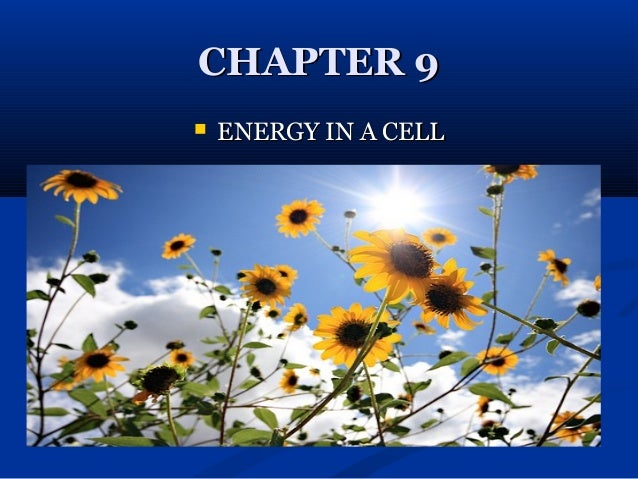 CHAPTER 9   ENERGY IN A CELL
