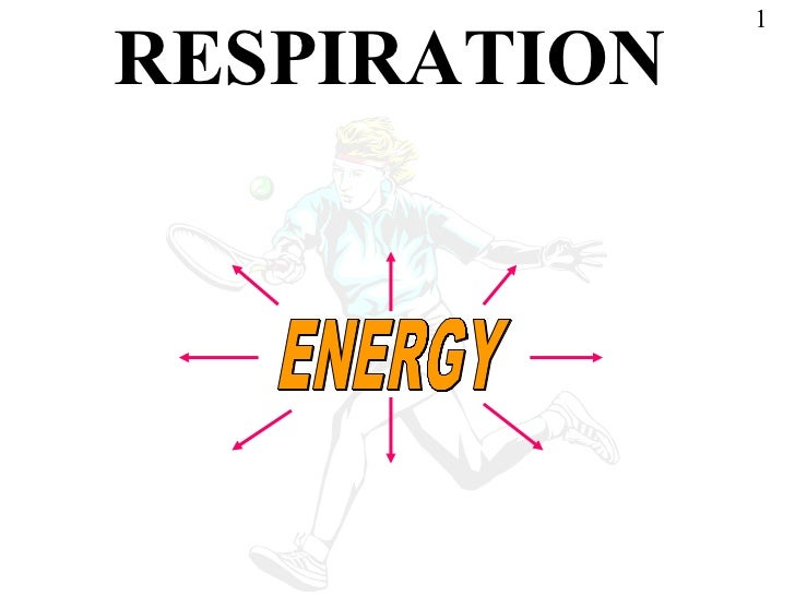 Powerpoint respiration   copy