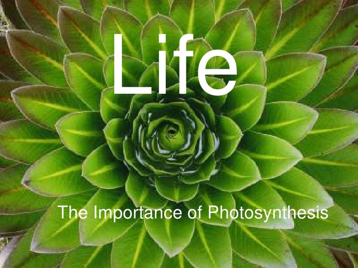 Life<br />Life<br />The Importance of Photosynthesis<br />