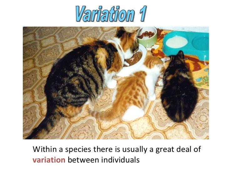 Powerpoint variation