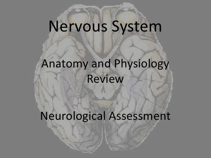 Nervous System<br />Anatomy and Physiology Review<br />Neurological Assessment<br />