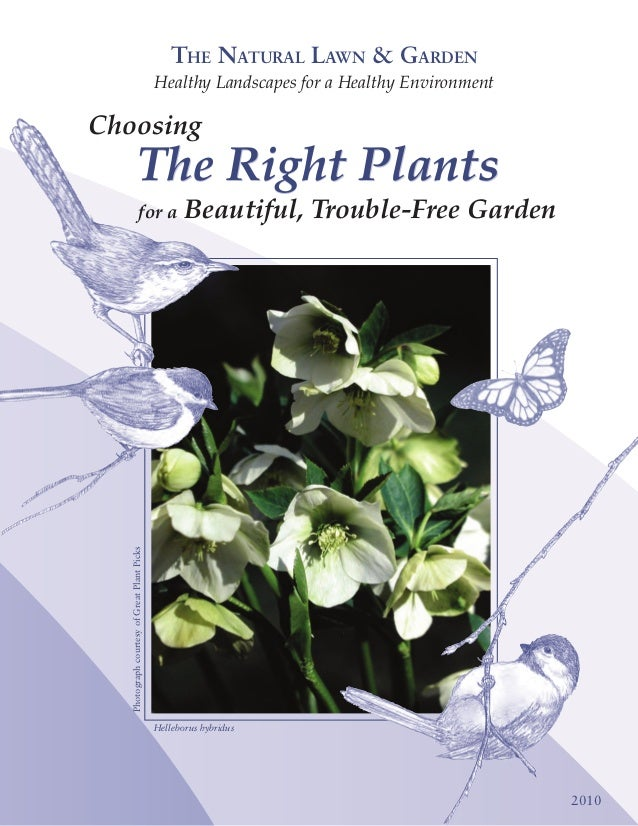 Choosing the Right Plants for A Beautiful, Trouble Free Garden - Natural Lawn