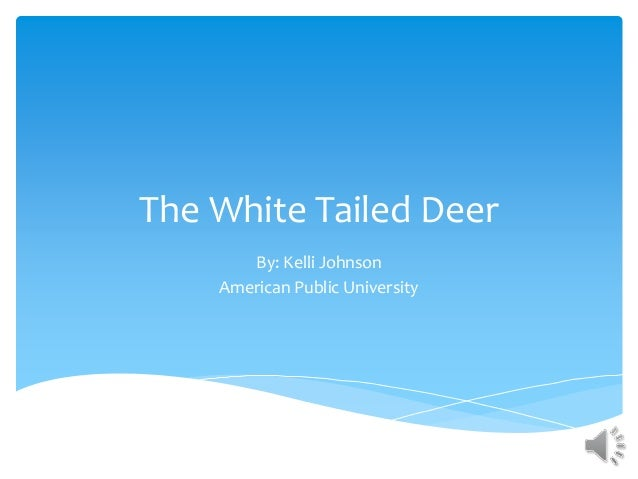 The White Tailed Deer By: Kelli Johnson American Public University