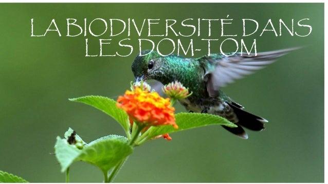 LA BIODIVERSITÉ DANS LES DOM-TOM