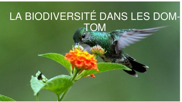 LA BIODIVERSITÉ DANS LES DOM- TOM