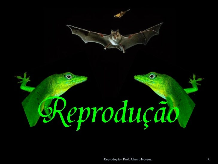 Reprodução - Prof. Albano Novaes.   1