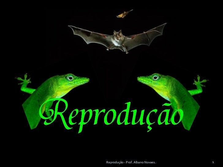 Ppoint.bio.reprodução