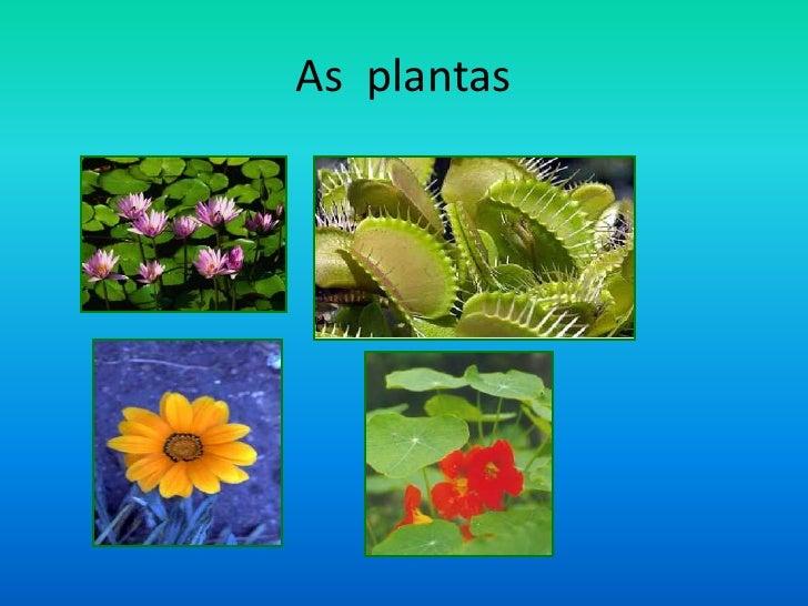 Pp Plantas