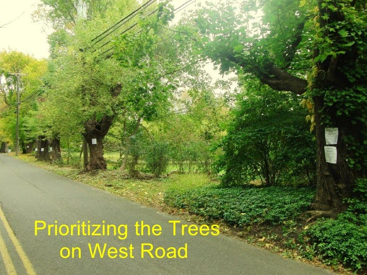 Prioritizing the Trees on West Road