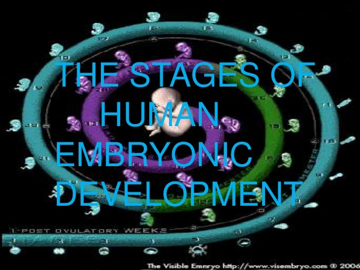 THE STAGES OF  HUMANEMBRYONICDEVELOPMENT