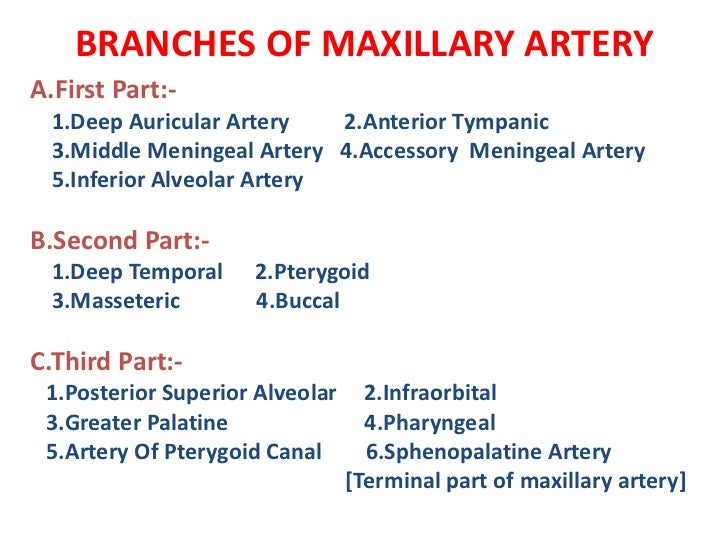 Ophthalmic Artery Branches Mnemonic – images free download - human ...