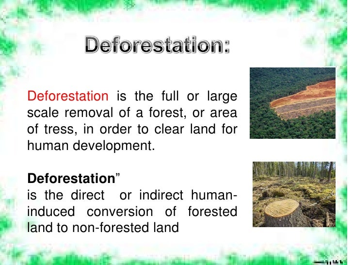 What are the effects of deforestation