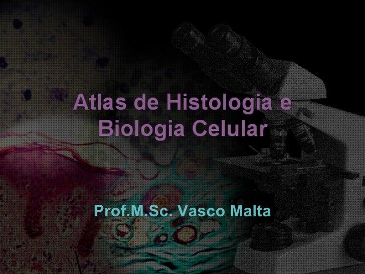Prof.M.Sc. Vasco Malta