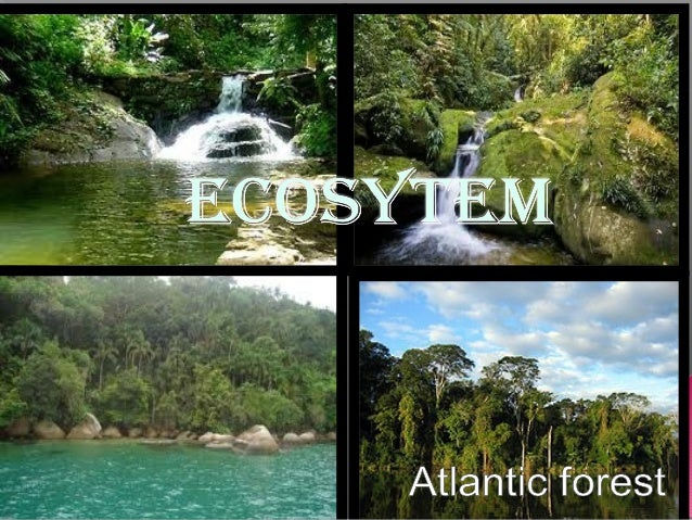  The Atlantic forest is a tropical and subtropical moist forest, tropical dry forest, tropical savanna, premontane forest...