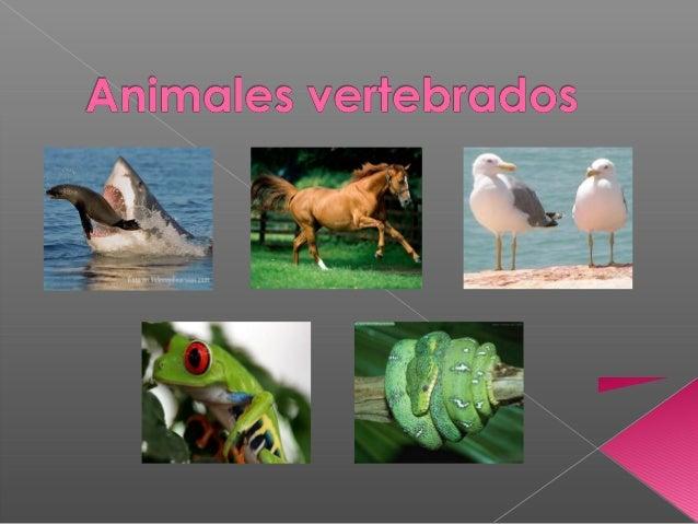  Características generales.  Ciclóstomos.  Peces - Elasmobranquios - Teleósteos  Anfibios - Urodelos - Anuros  Reptil...