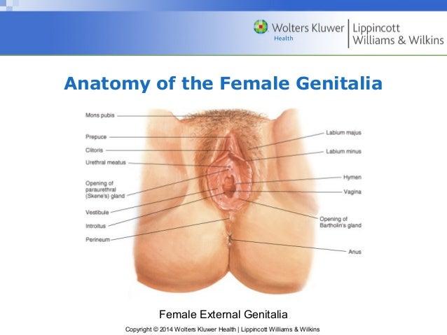 Vagina Gallery 35
