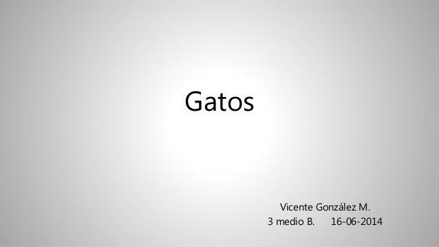 Gatos Vicente González M. 3 medio B. 16-06-2014