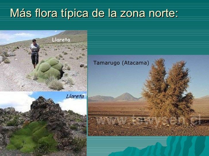 Decoracion Zona Norte De Chile ~ pt chile