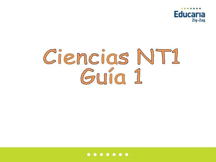 Ciencias NT1 Guía 1