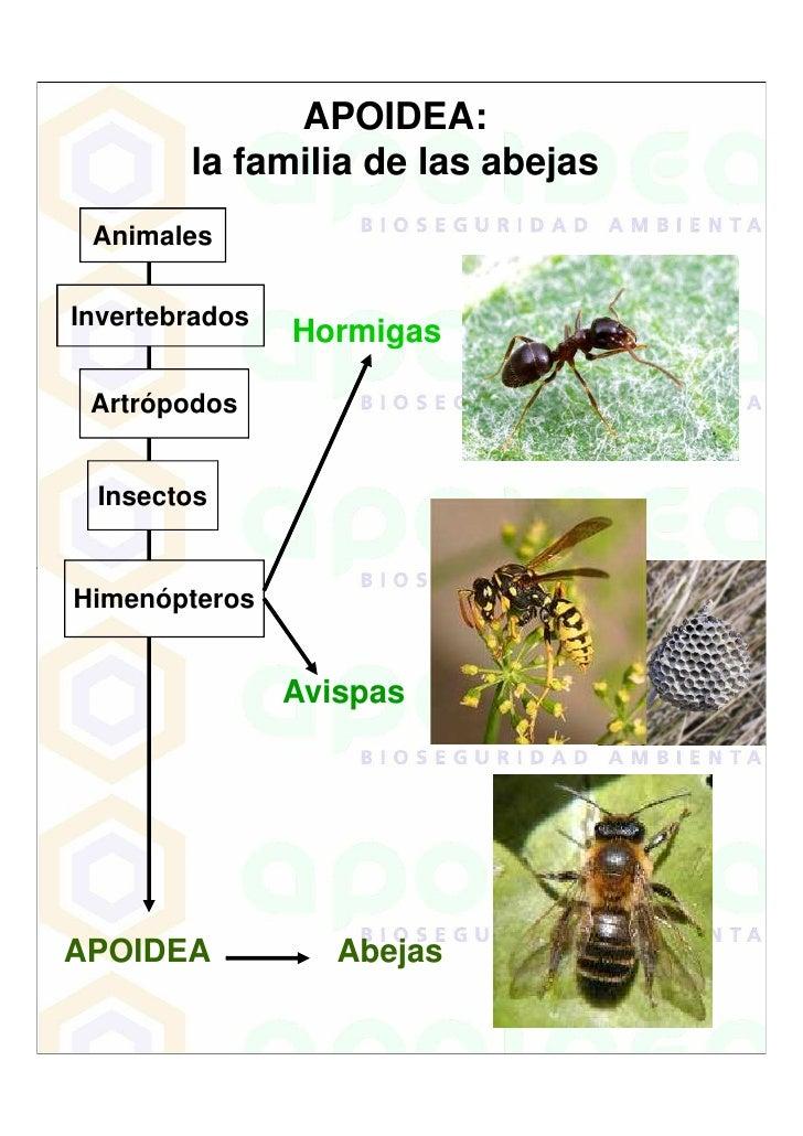 APOIDEA:         la familia de las abejas  Animales  Invertebrados