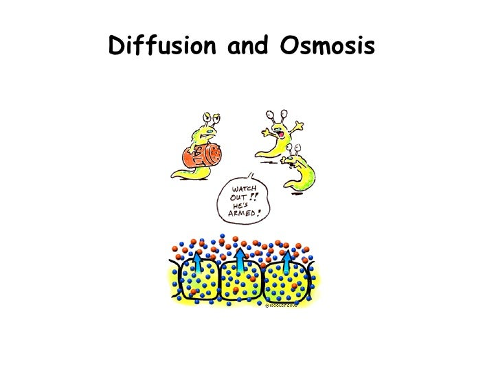 Ppt diffusion and osmosis