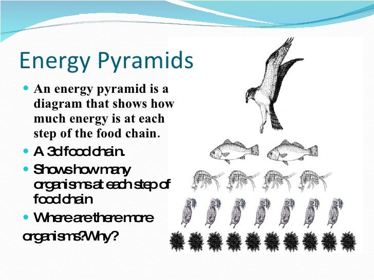 ppt ecology energy pyramid    consumer    energy pyramids